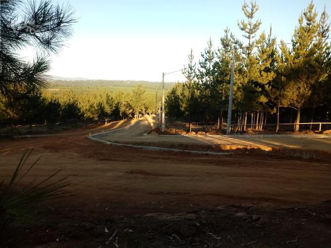 Camino Algarrobo - Totoral km 3,